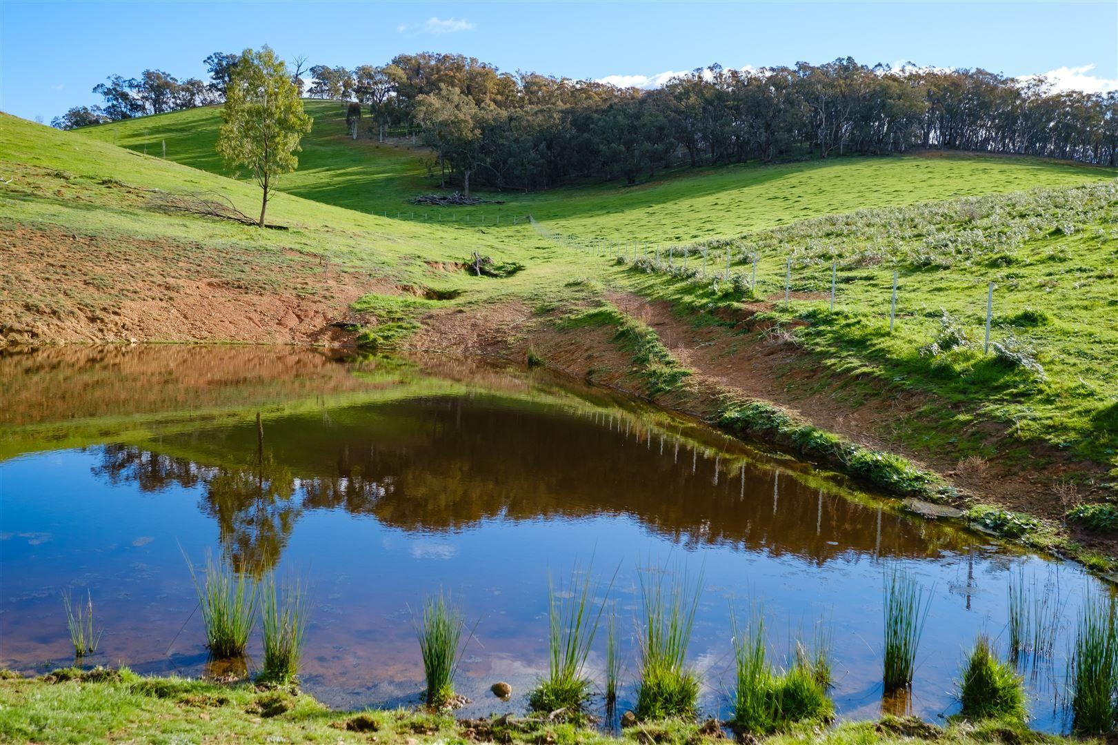 468 Vokins Creek Road, Holbrook NSW 2644, Image 1
