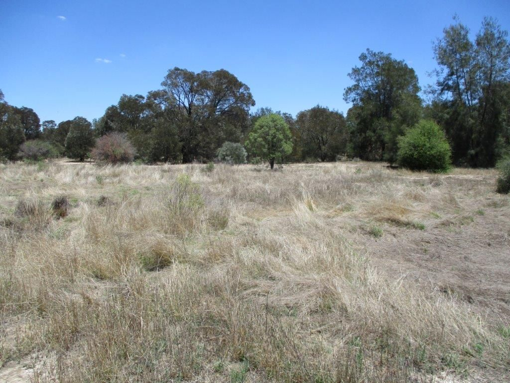 1279 Acres Brigalow Country, The Gums QLD 4406, Image 0