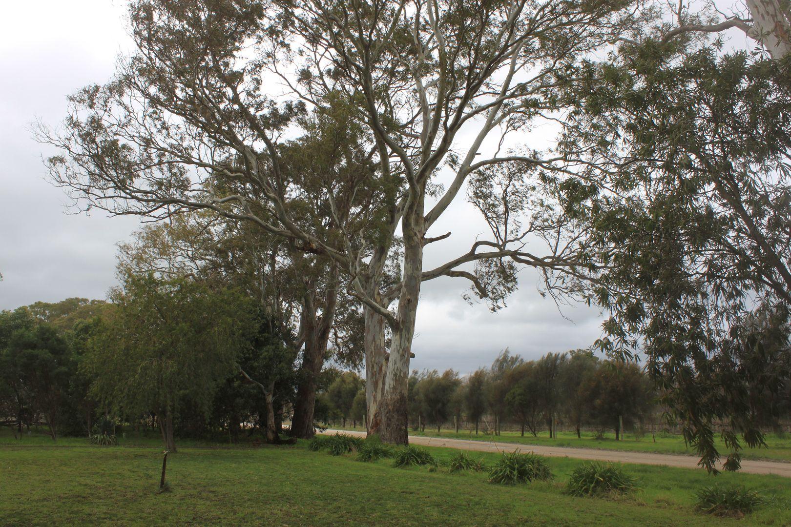 437 Old Comaum Road, Penola SA 5277, Image 2