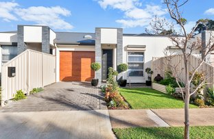 Picture of 12B Trott Grove, Oaklands Park SA 5046