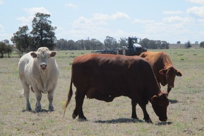 """Picture of """"MUNKORA"""" 2480 ACRES for AUCTION, THE GUMS QLD 4406"""