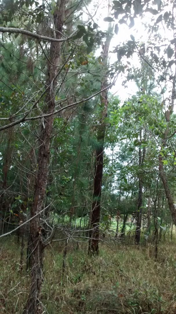 Gulmarrad NSW 2463, Image 0