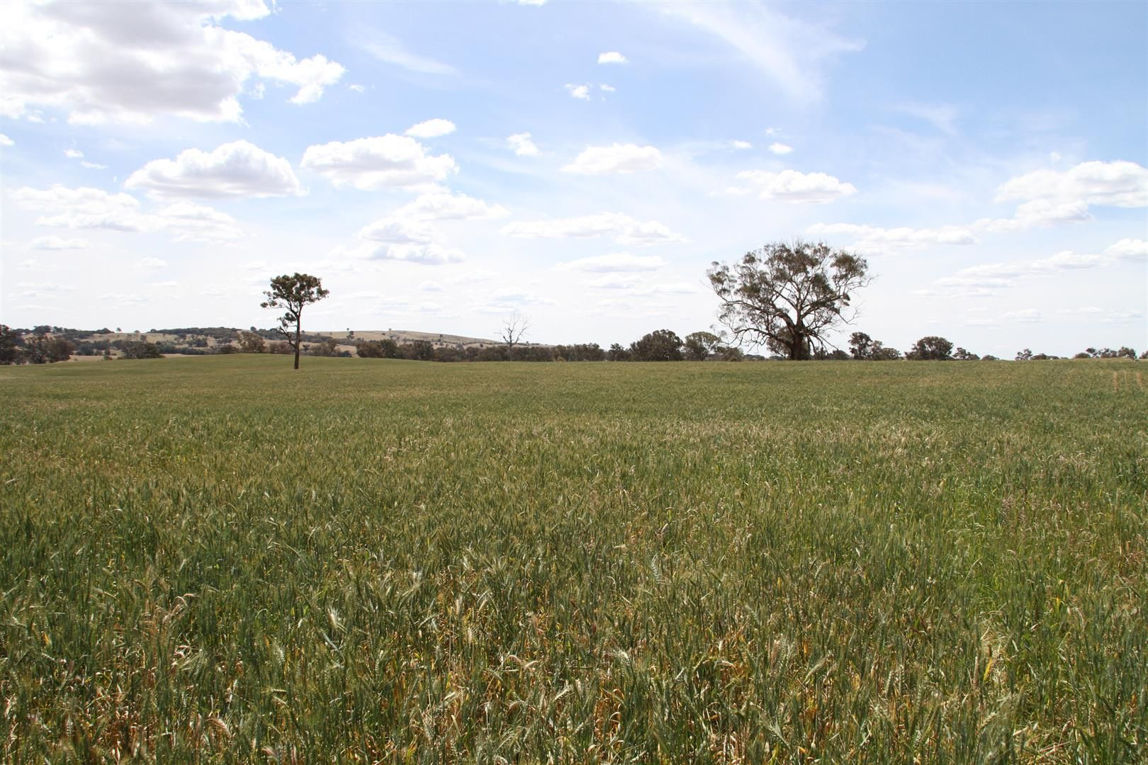 680 Little Plains Road, Rye Park NSW 2586, Image 2