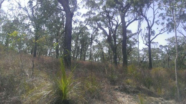Lot 8 Greenhill Access Road, Ilbilbie QLD 4738, Image 0