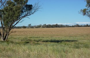 Lot 5 Whiteleys Road, Molong NSW 2866