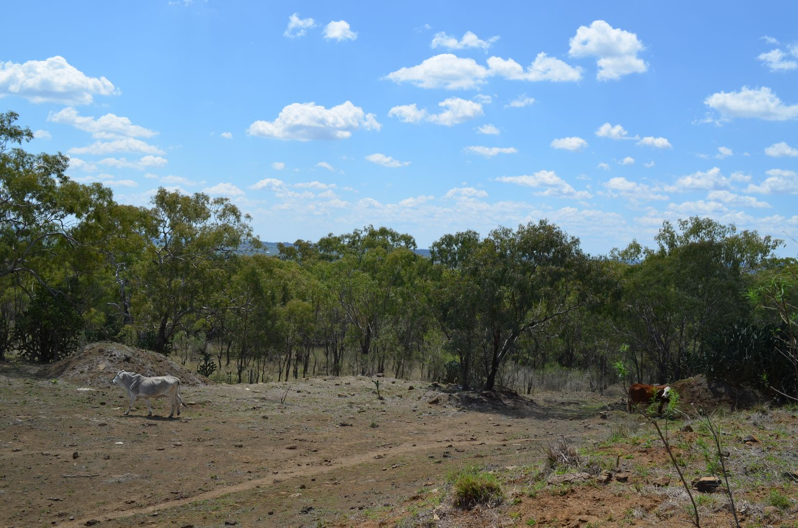 Lot 1 Holzwarts Road, Mount Marshall QLD 4362, Image 2