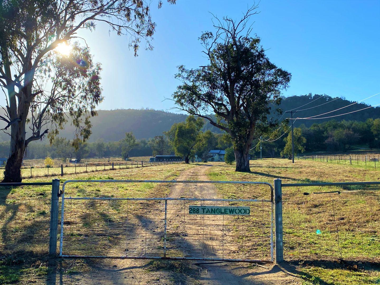 288 Tanglewood Road, Moonbi NSW 2353, Image 0
