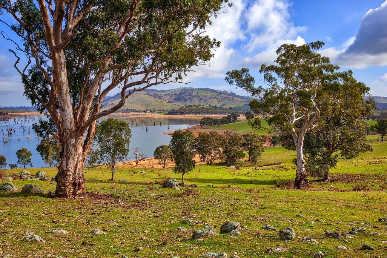"""Boxbourne"" River Road, Wymah NSW 2640, Image 0"