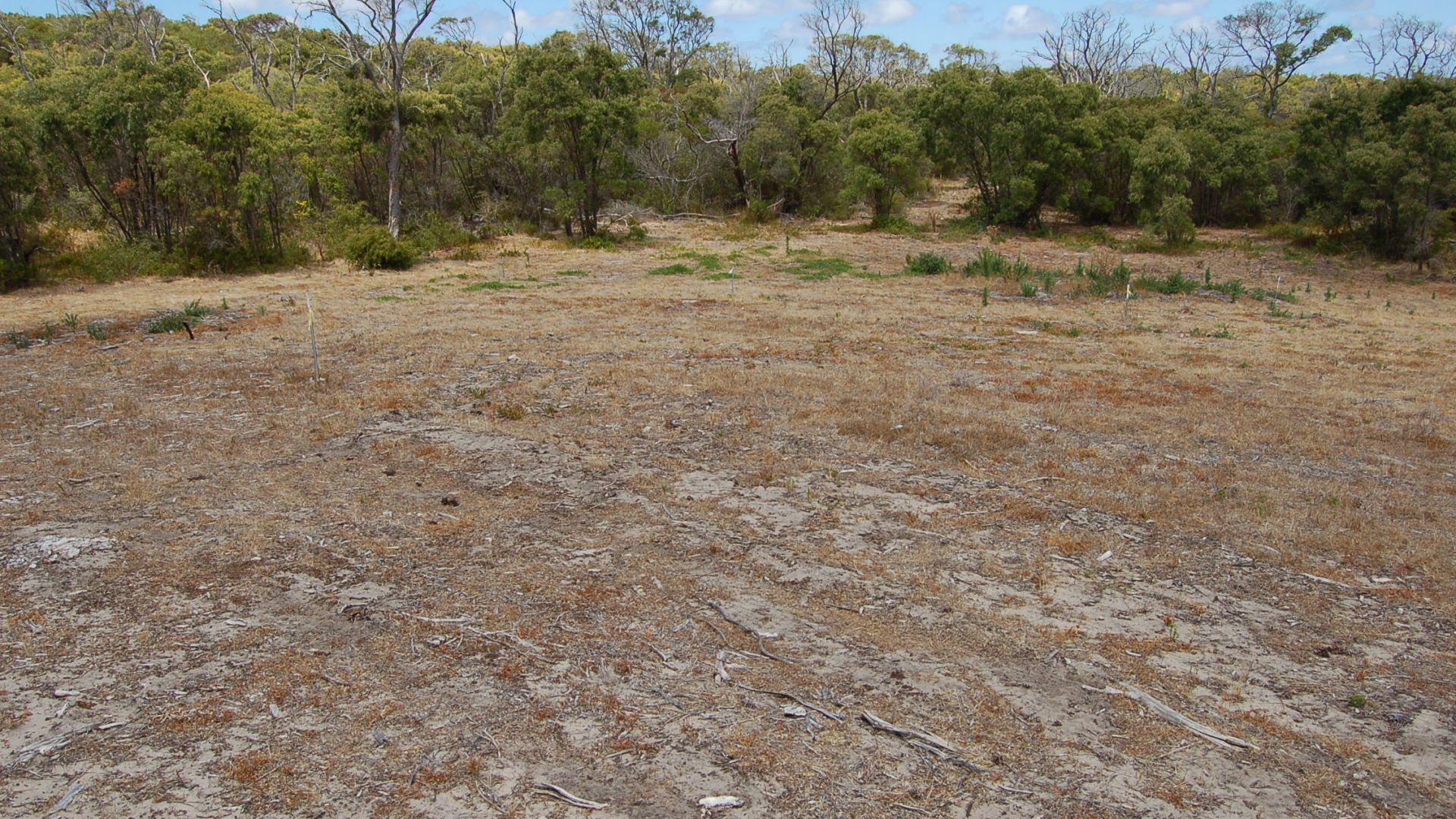 Lot 126 Wellstead Road South, Bremer Bay WA 6338, Image 1