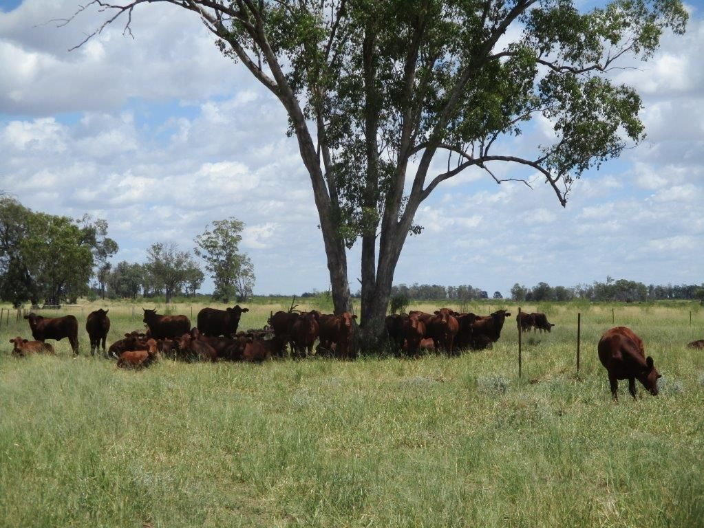 5528 ACRES FREEHOLD PLUS 2226 ACRES LEASE, Moonie QLD 4406, Image 0