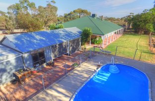Picture of 272 Crase Road, Loxton SA 5333