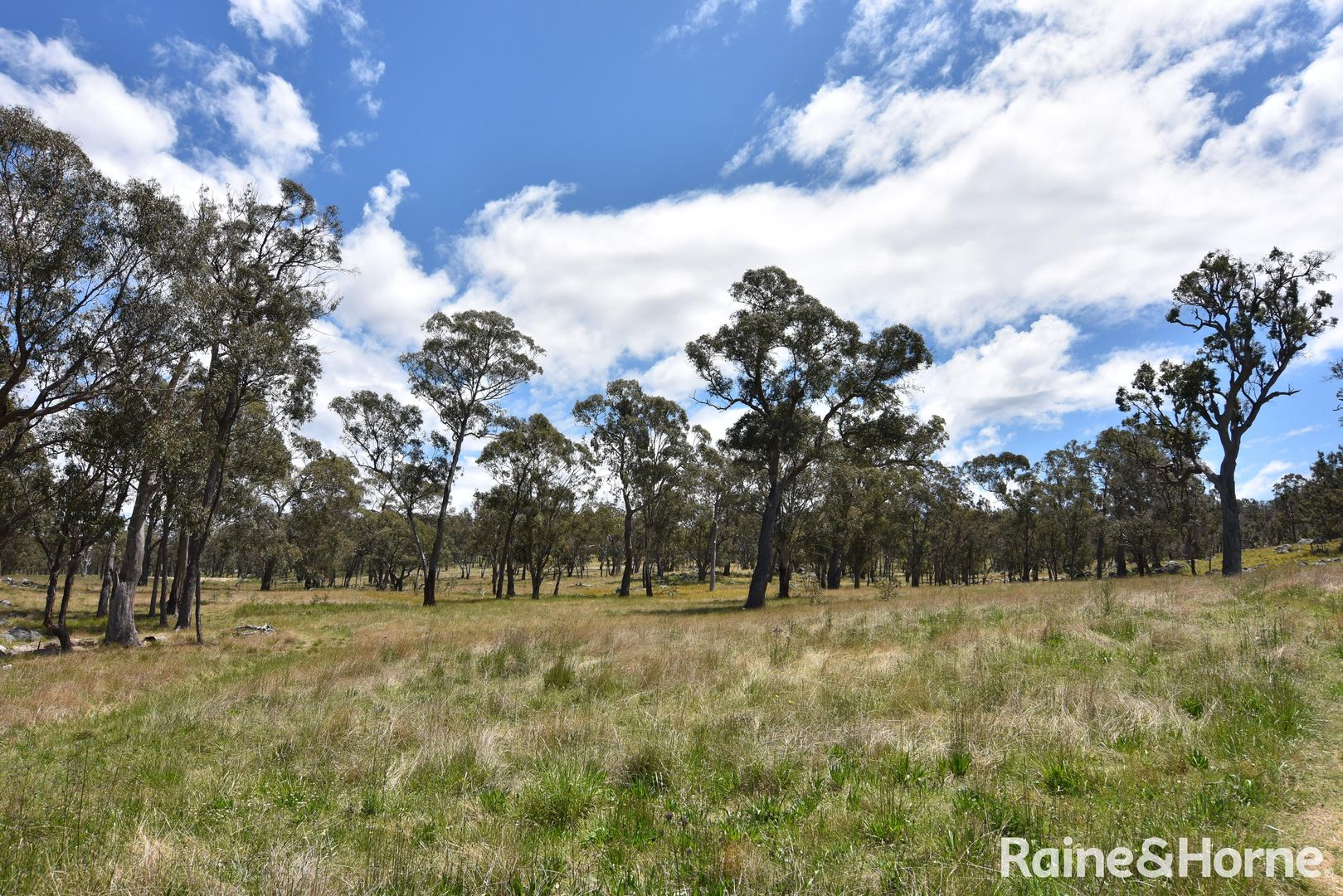 Lot 252 and 577 Wellington Vale Road, Deepwater, Glen Innes NSW 2370, Image 1