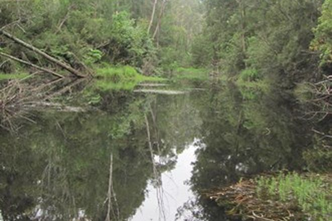 Picture of Lot 2, 375 Wamban Road, MORUYA NSW 2537