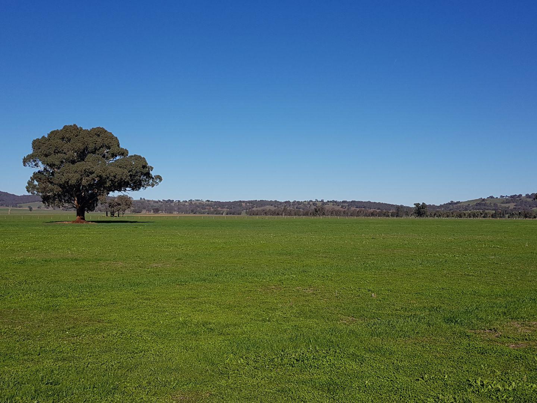 Ingleneuk, The Rock NSW 2655, Image 1