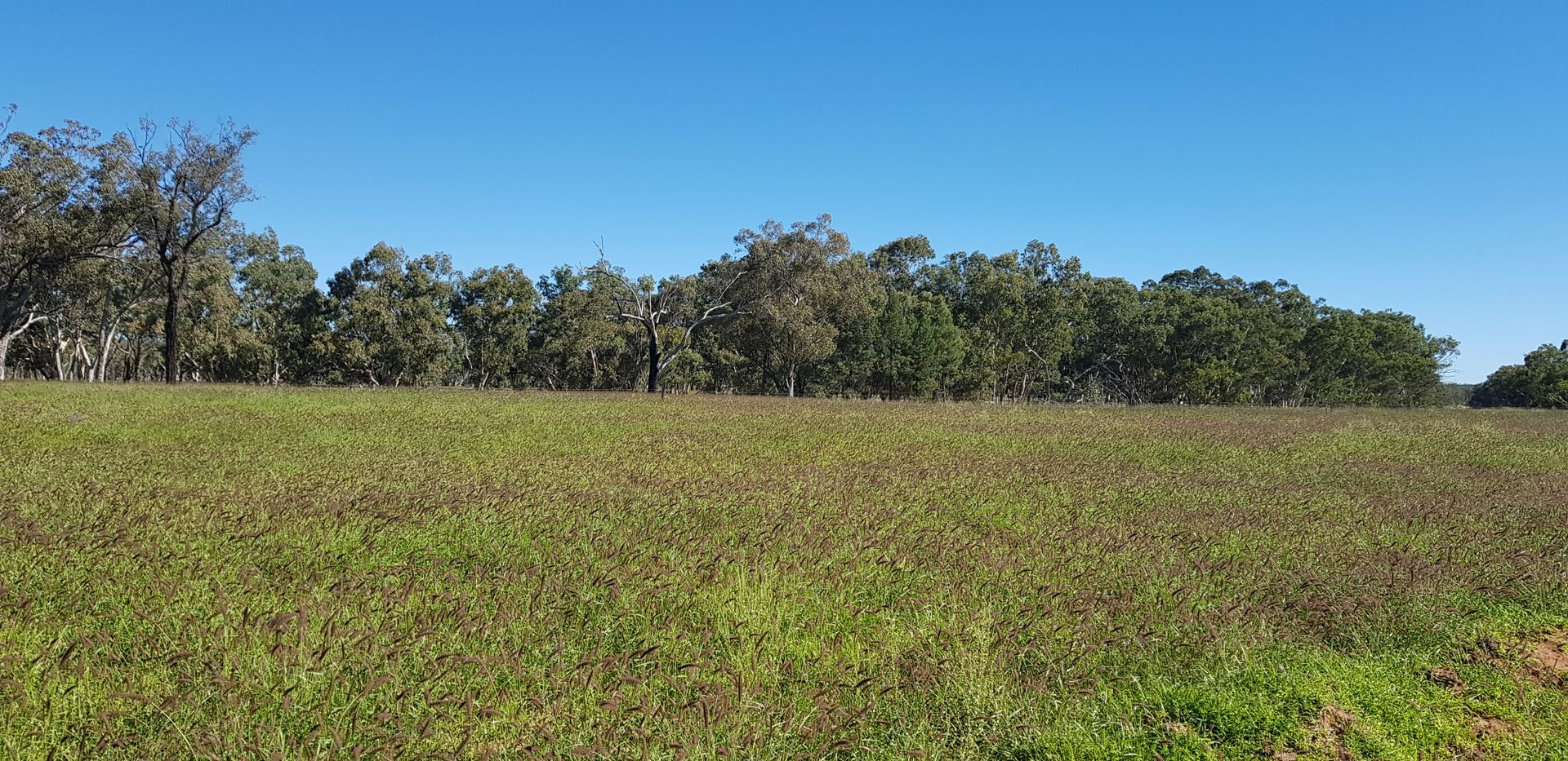 .. Mount Owen Road, Mitchell QLD 4465, Image 0