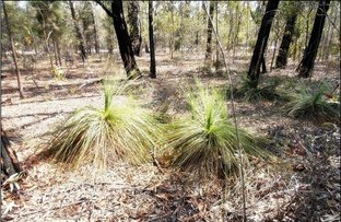 Picture of 0 Cabbage Gum Drive, Millmerran Woods QLD 4357