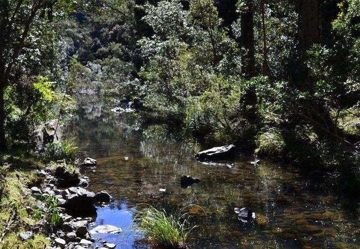 714 Fairweather Creek Rd, Nymboida NSW 2460, Image 0