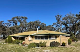 Picture of 39 McKillop Lane, Stanthorpe QLD 4380