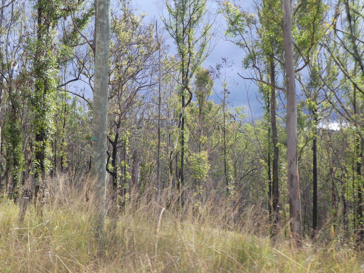 12 Paddys Flat Road, Tabulam NSW 2469, Image 1