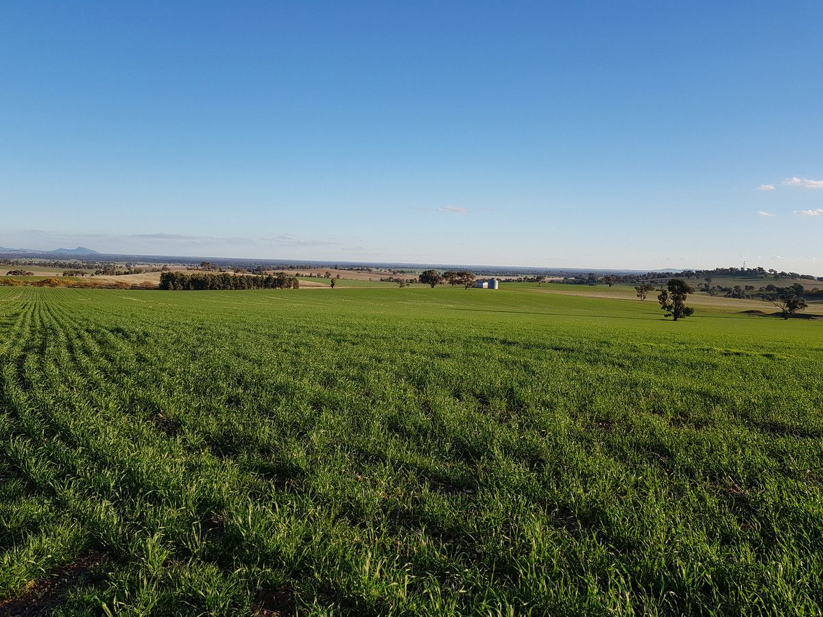 """KARINYAH"" 847 MILLWOOD Road, Wagga Wagga NSW 2650, Image 0"