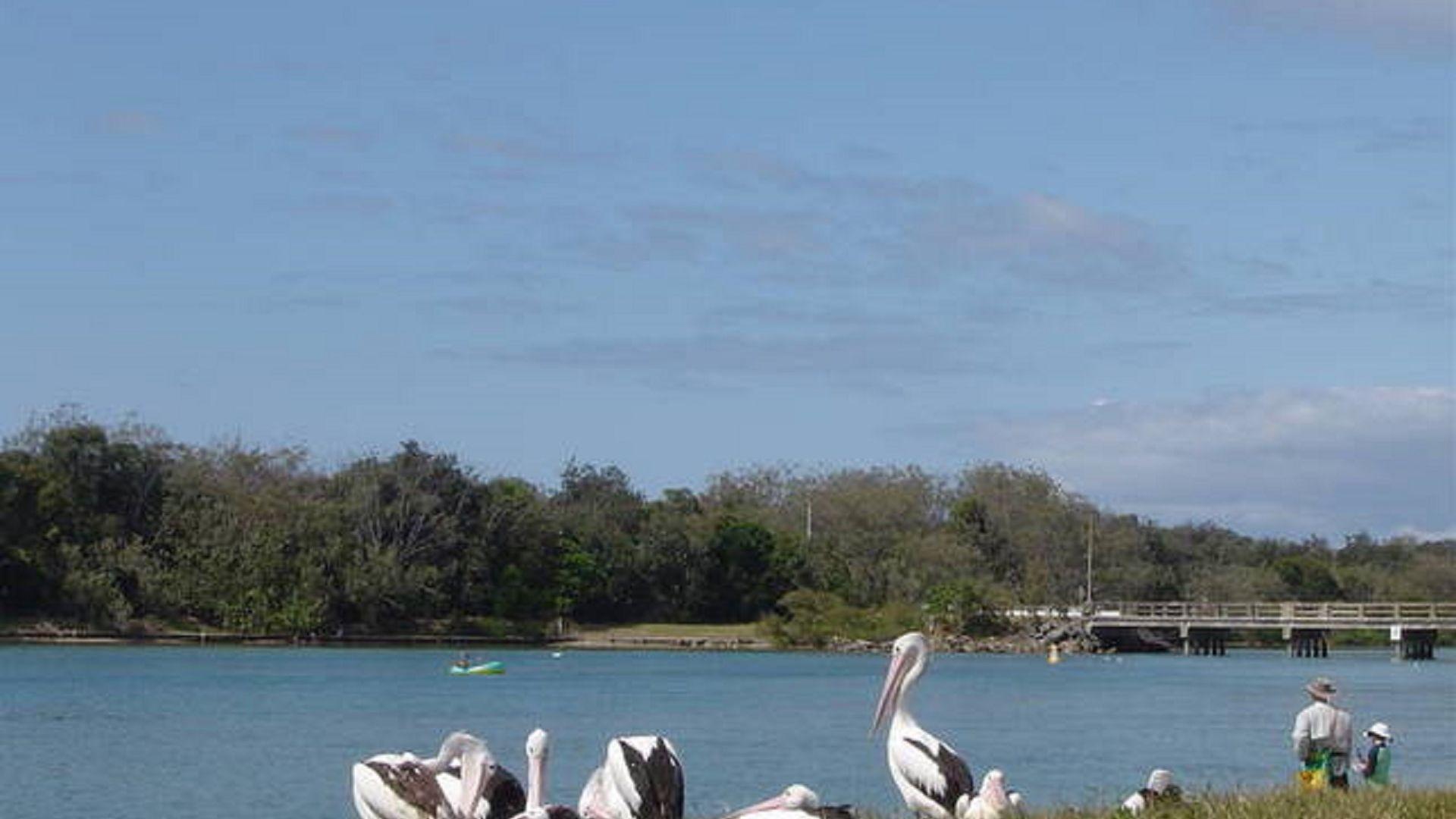 33 Coronation Ave, Pottsville Beach NSW 2489, Image 19
