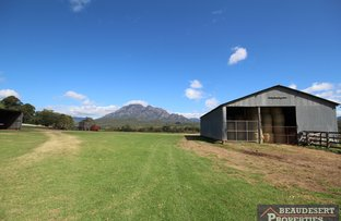 Picture of Mount Barney QLD 4287