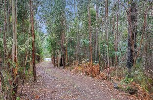 Picture of 111 DEVIATION ROAD, Kinglake VIC 3763