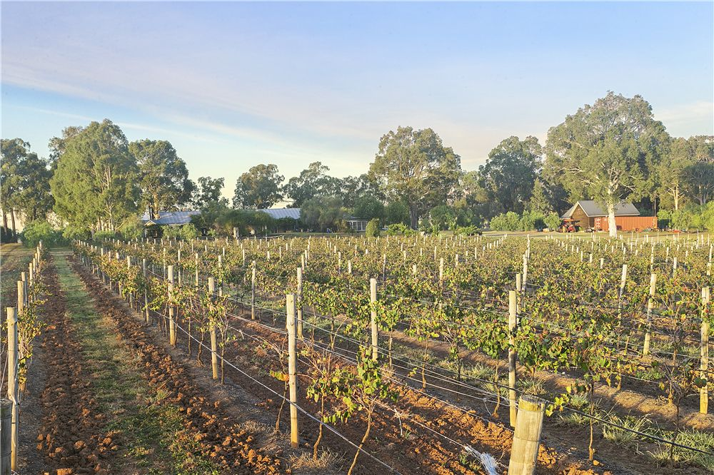 138 Gillards Road, Pokolbin NSW 2320, Image 1