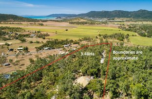 Picture of 345 Riordanvale Road, Riordanvale QLD 4800