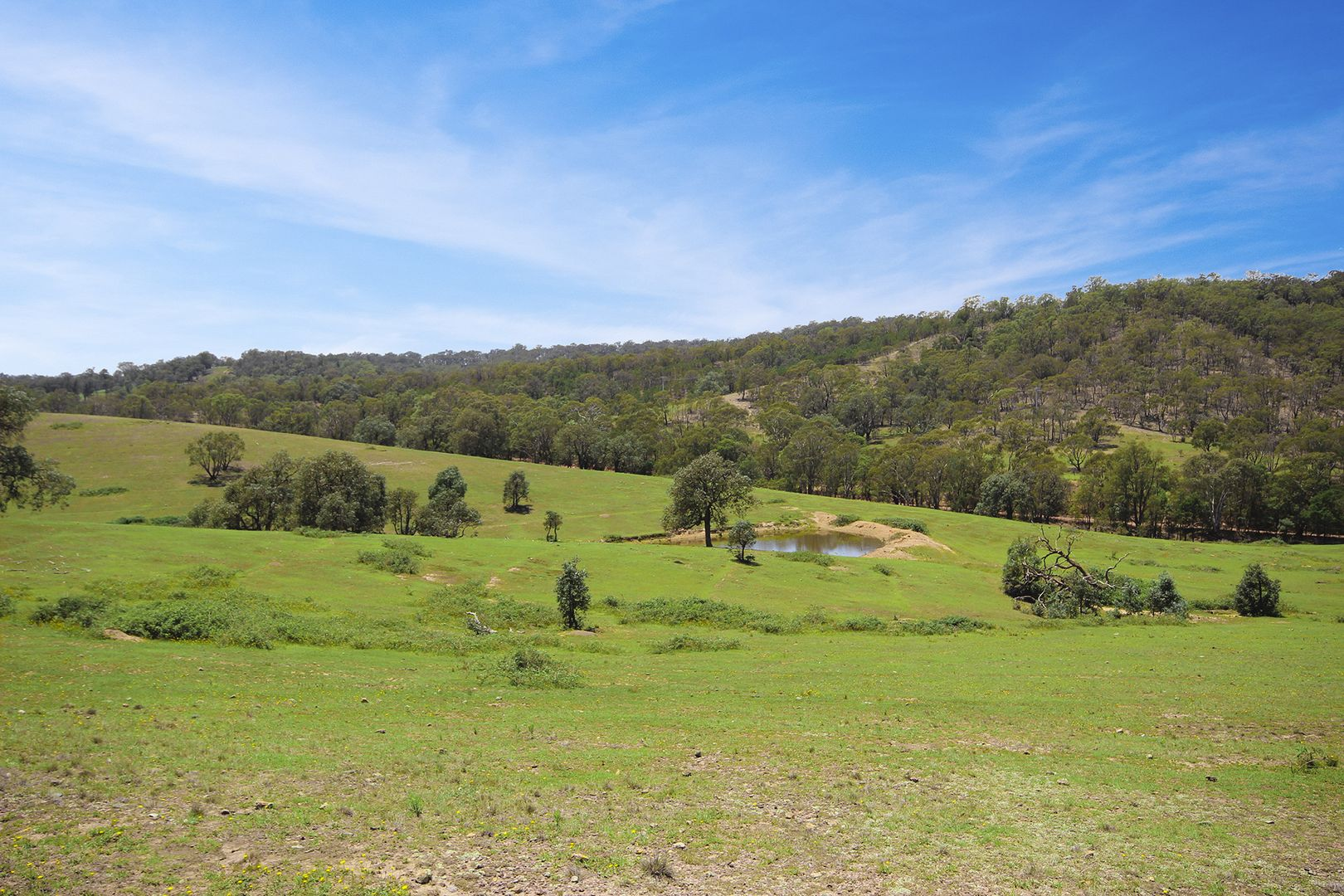 787 Inverary Rd, Paddys River NSW 2577, Image 0