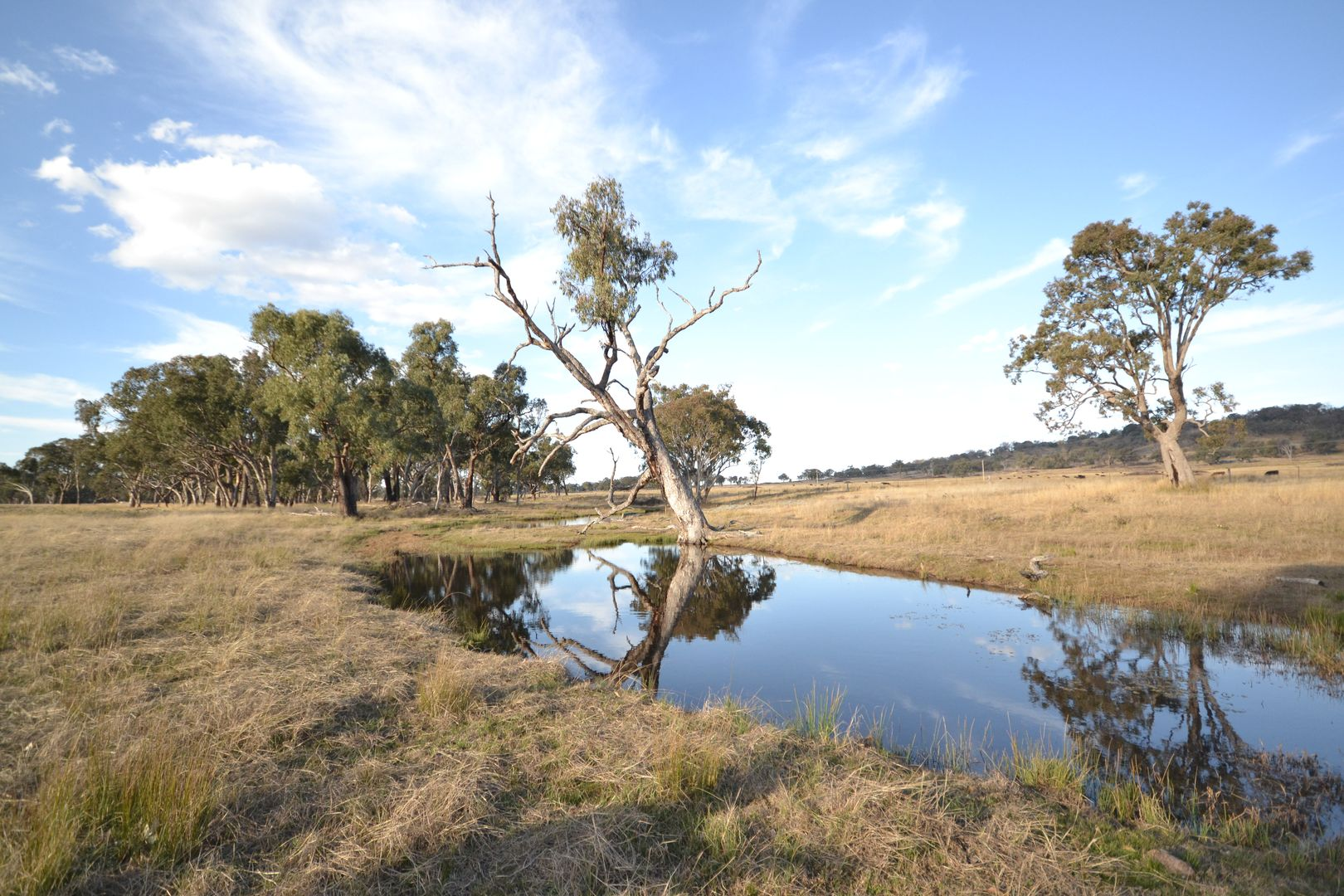 906 GROVE ROAD, Inverell NSW 2360, Image 2