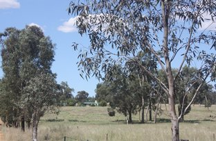 Picture of Coolah NSW 2843