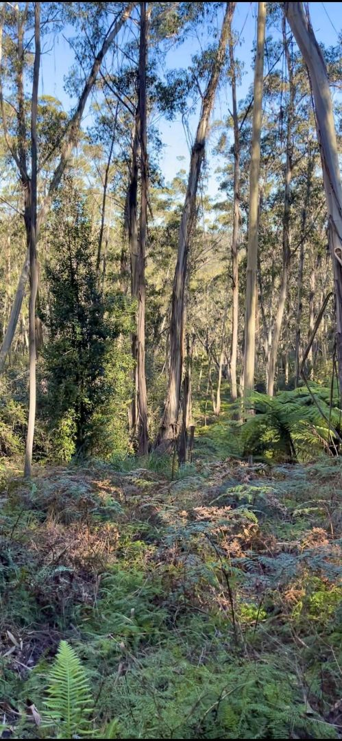 14 Nellies Glen Road, Katoomba NSW 2780, Image 1