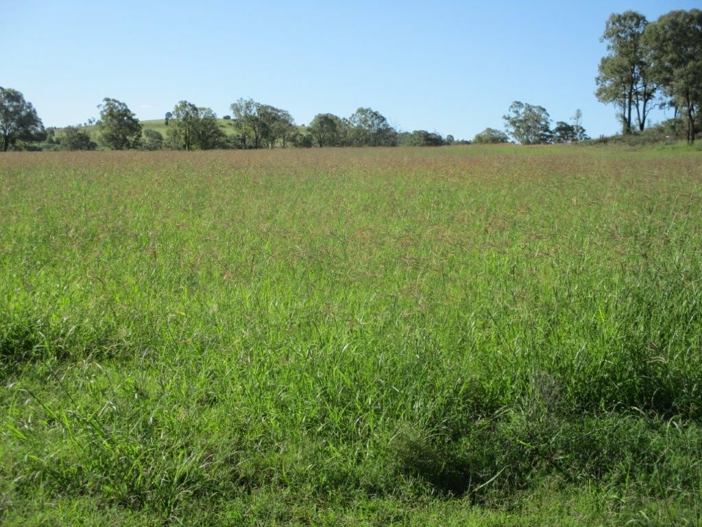 230 ACRES, SCRUB SOIL GRAZING, Peranga QLD 4352, Image 1
