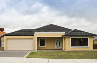 Picture of 117 Roxburghe Drive, The Vines WA 6069
