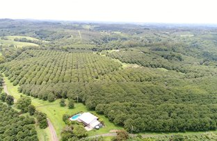 Picture of - Ashlin Road, Whian Whian NSW 2480