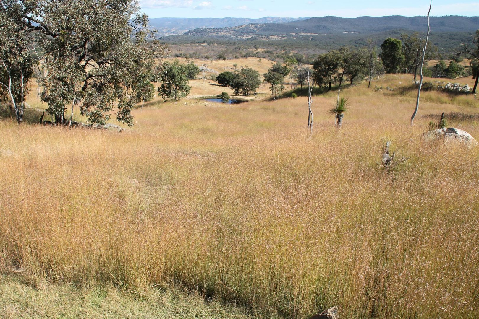 Lot 28 Gunyah Road, Tenterfield NSW 2372, Image 1