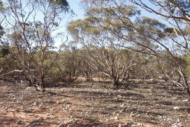 Picture of Murraylands Road, BLACK HILL SA 5353
