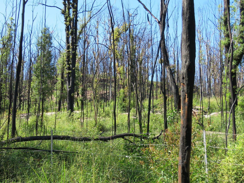 3219 Old Tenterfield Road, Busbys Flat NSW 2469, Image 1