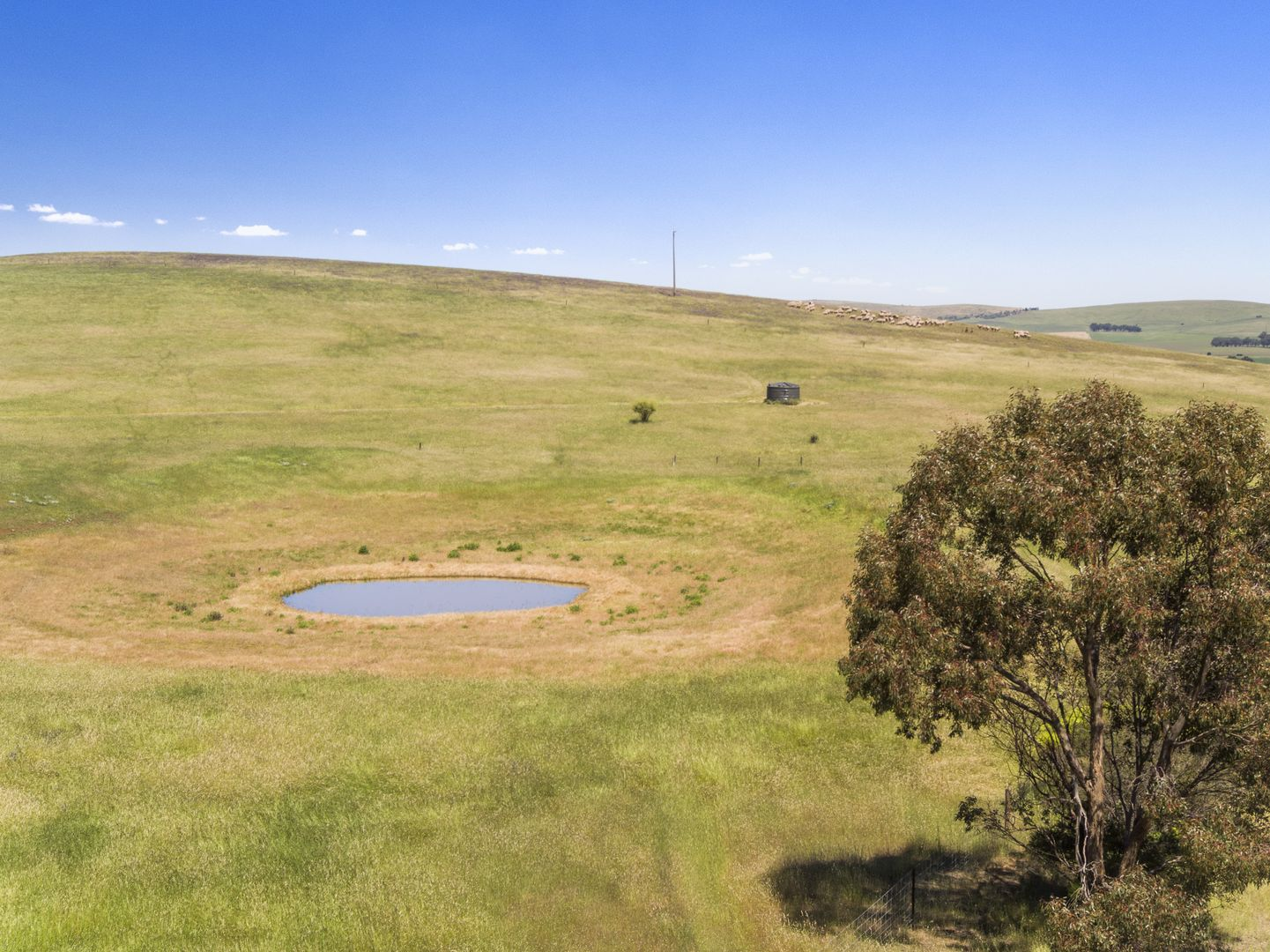 'Horse Paddock', Betterson Road, Hill River SA 5453, Image 0