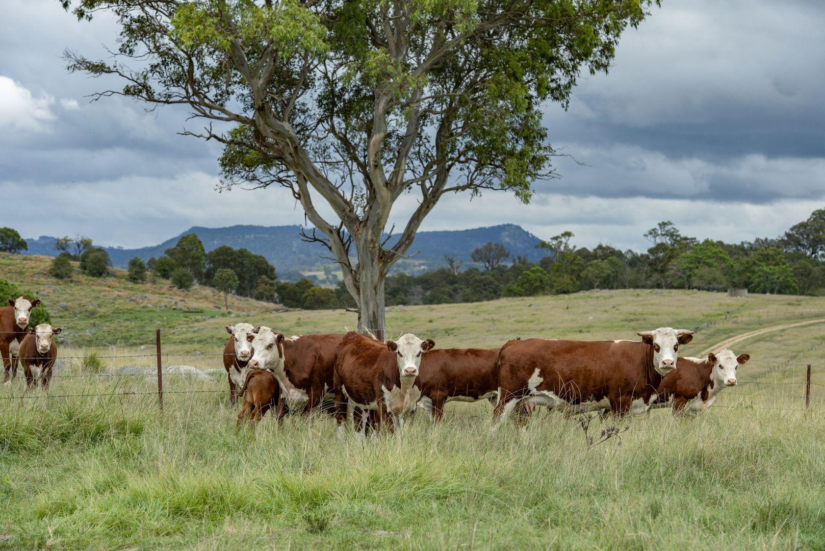 29 Myon Mount Road, Tenterfield NSW 2372, Image 2