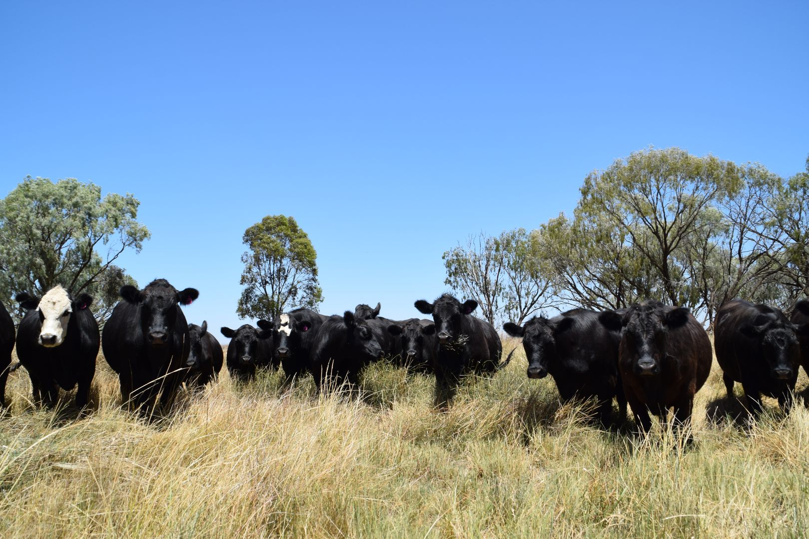 'Wooringa' 535 Ceres Siding Road, Narromine NSW 2821, Image 0