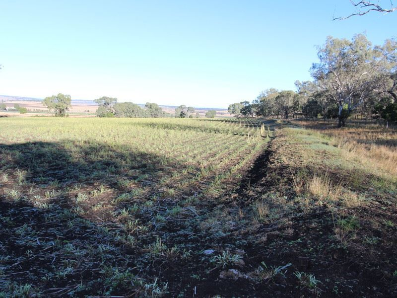 Lot 1, cnr Roeseller & Back Plains Road, Nobby QLD 4360, Image 0
