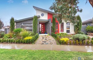 12 Phyllis Frost Street, Forde ACT 2914