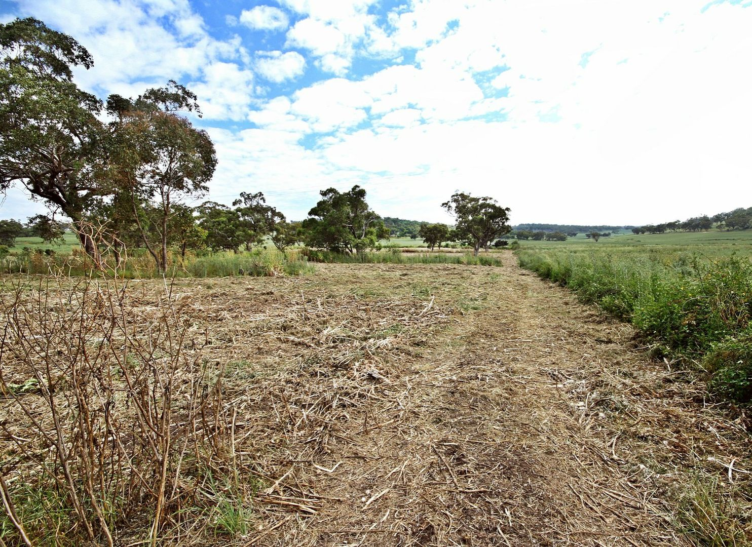 Lot 145 Golden Highway, Cassilis NSW 2329, Image 0