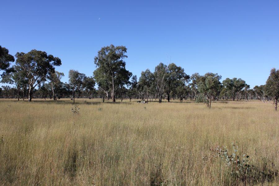 Thistledoo 14371 Guyra Rd, Tingha NSW 2369, Image 0