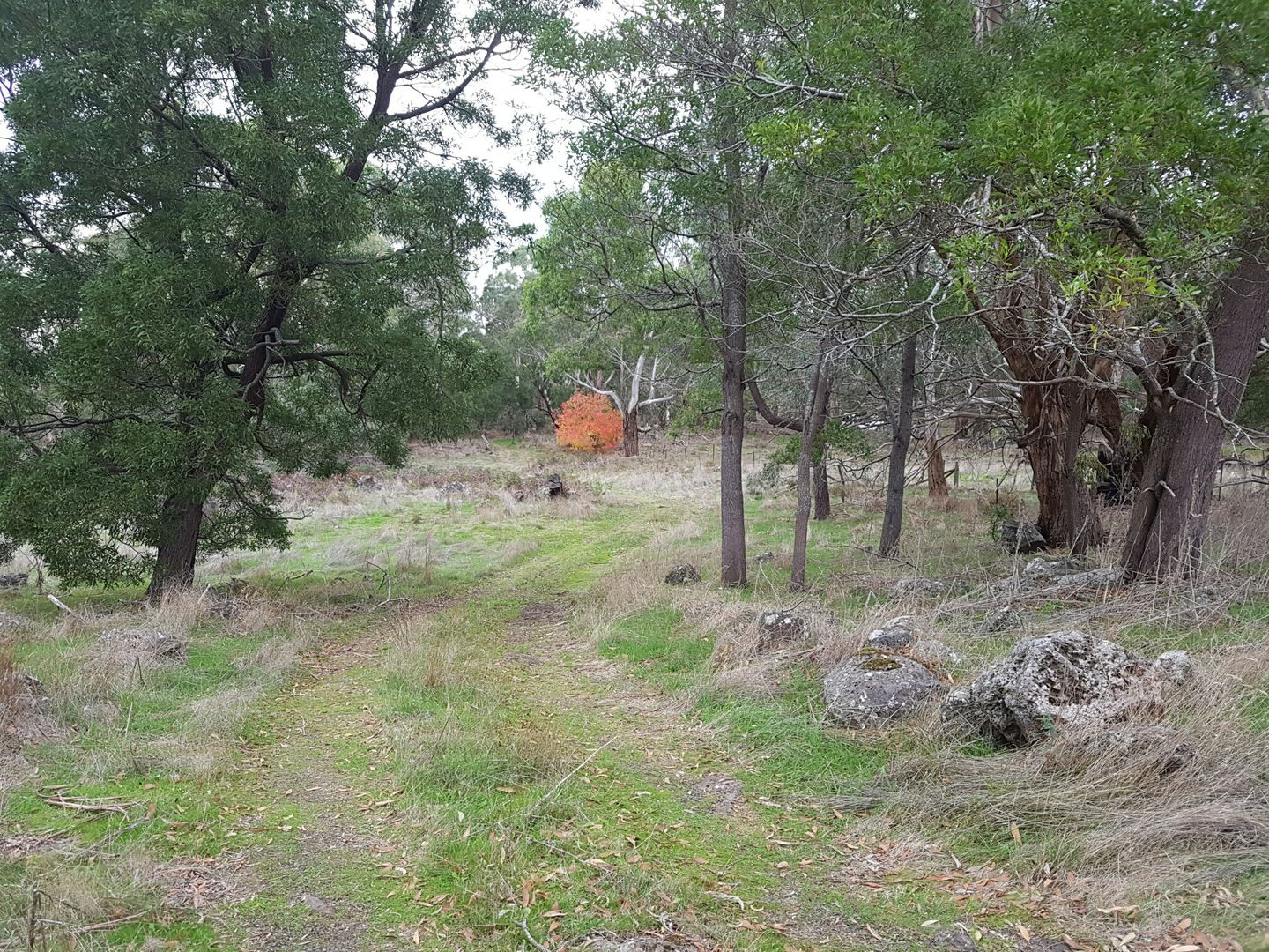 479 Scoullers Road, Stonyford VIC 3260, Image 0