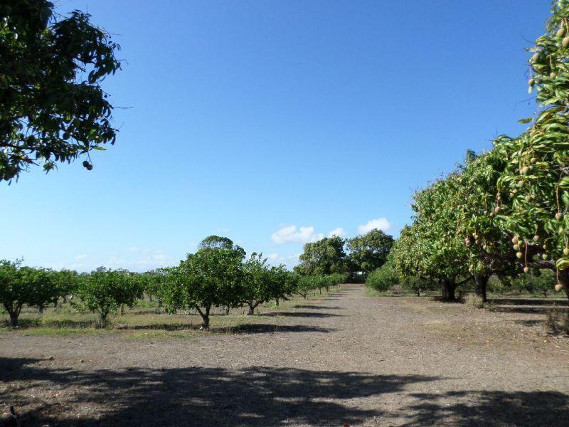 299 Inverdon Road, Bowen QLD 4805, Image 2