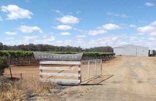 """Picture of """"Lavorare Farm"""" Maude Rd, Hay NSW 2711"""