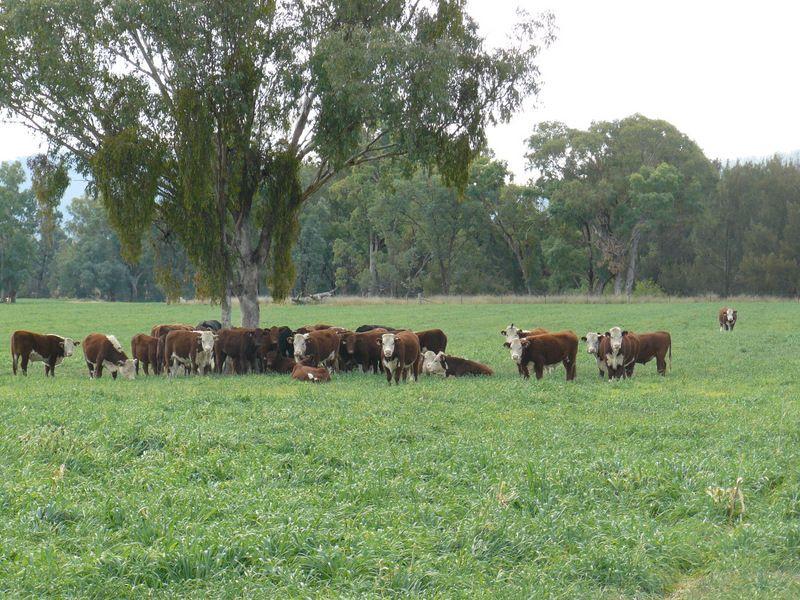 """"""" Araluen """", """" Finschaffen """", """" Kiaora East """", Bingara NSW 2404, Image 0"""